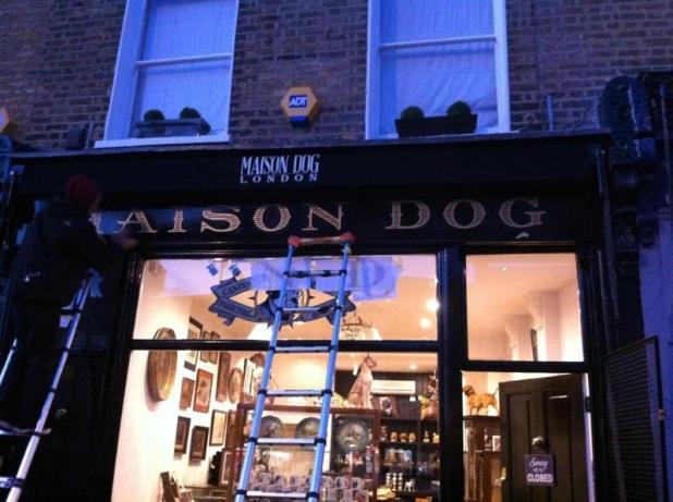 Maison dog glistening!
