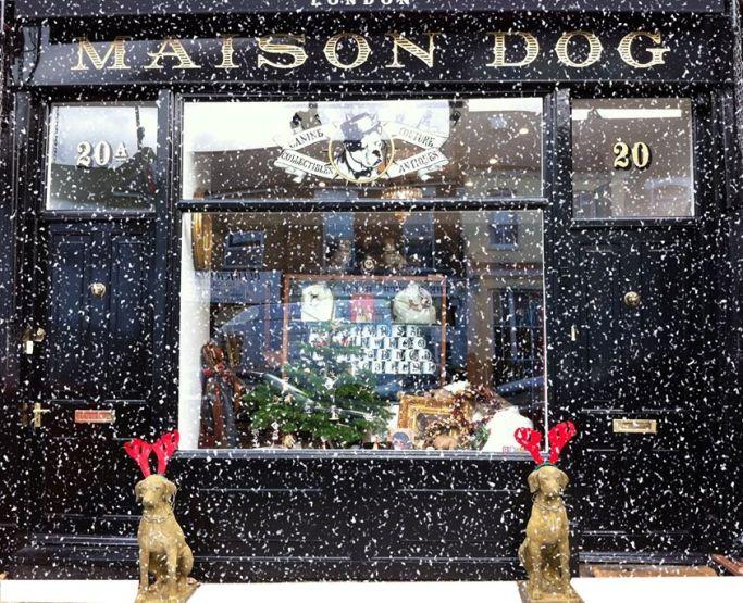 maison dog in snow